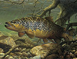 Andersen Trout Wildlife Indoor Wiper Mat